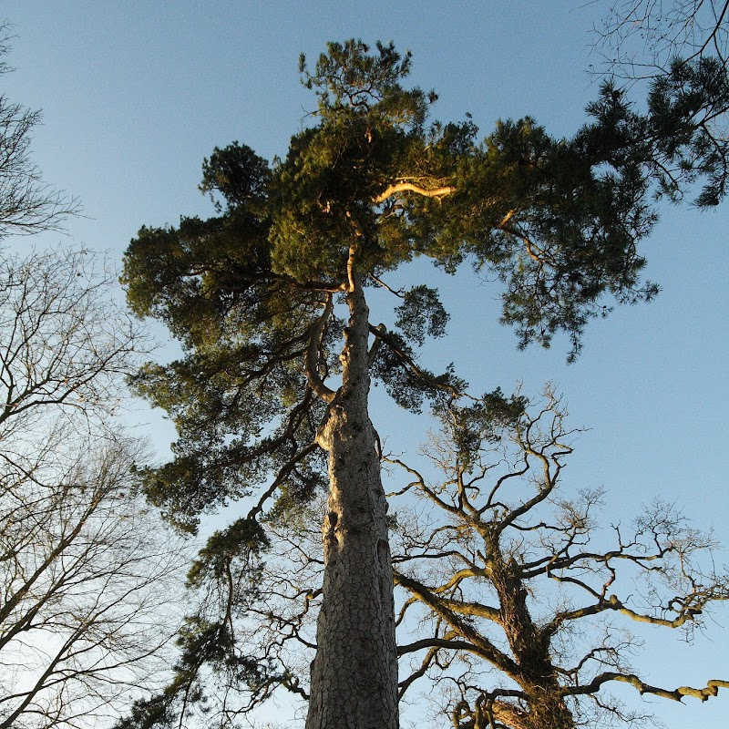 Stowe_Trees_24.JPG