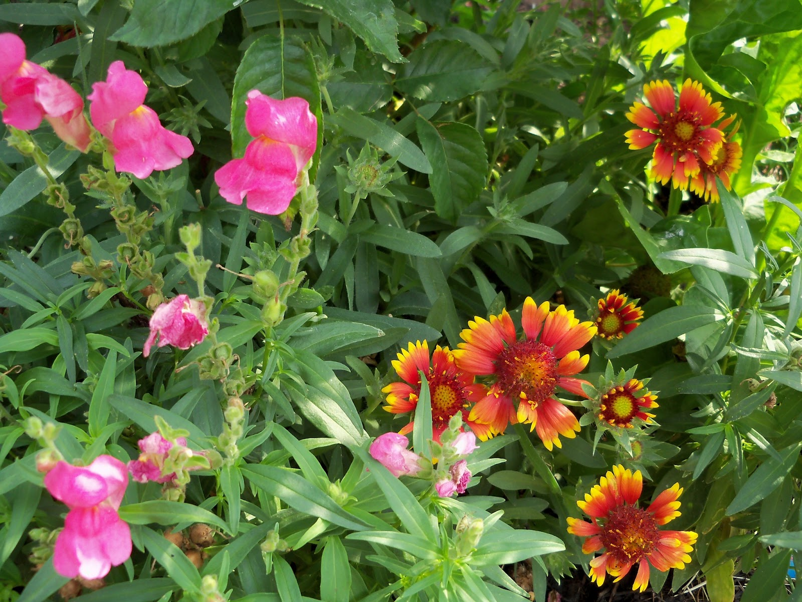 Gardening 2011 - 100_8565.JPG