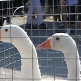 02 ottobre 2011 - Raffadali, fiera degli animali
