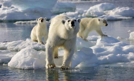 該報告發出警告說,地球的破壞性變化將會導致1億人喪生,很多動物的棲息地消失