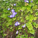 Gardening 2014 - 116_5261.JPG