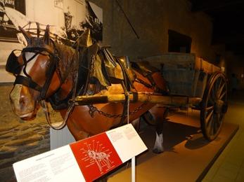 2018.07.01-027 cheval postier breton dans le musée