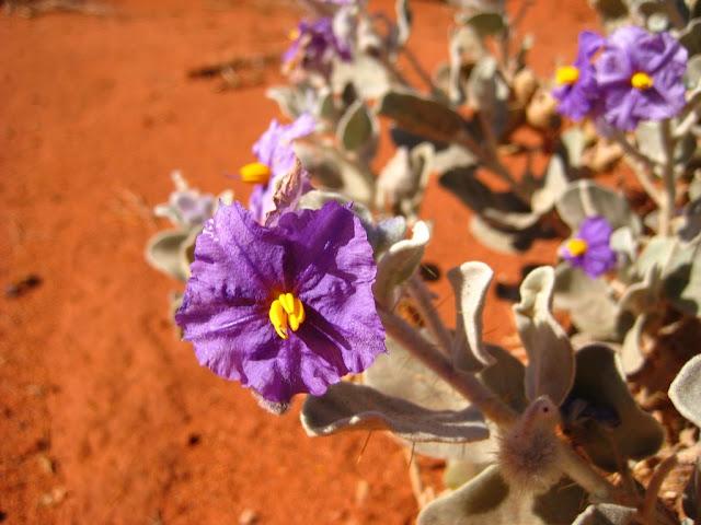 2008 - IMG_5096_Roadside_Flower.JPG