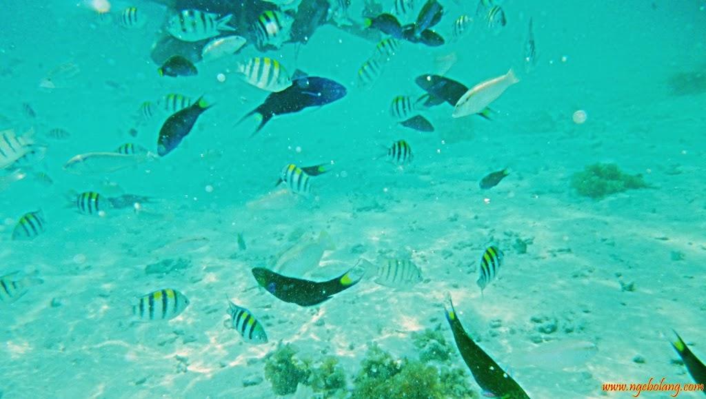 ngebolang-pulau-harapan-singletrip-nov-2013-pen-08