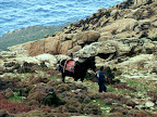 HINTERLAND Ikaria 17: The man and his mule