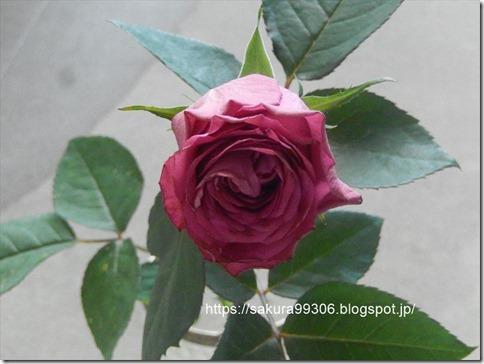 切り花薔薇