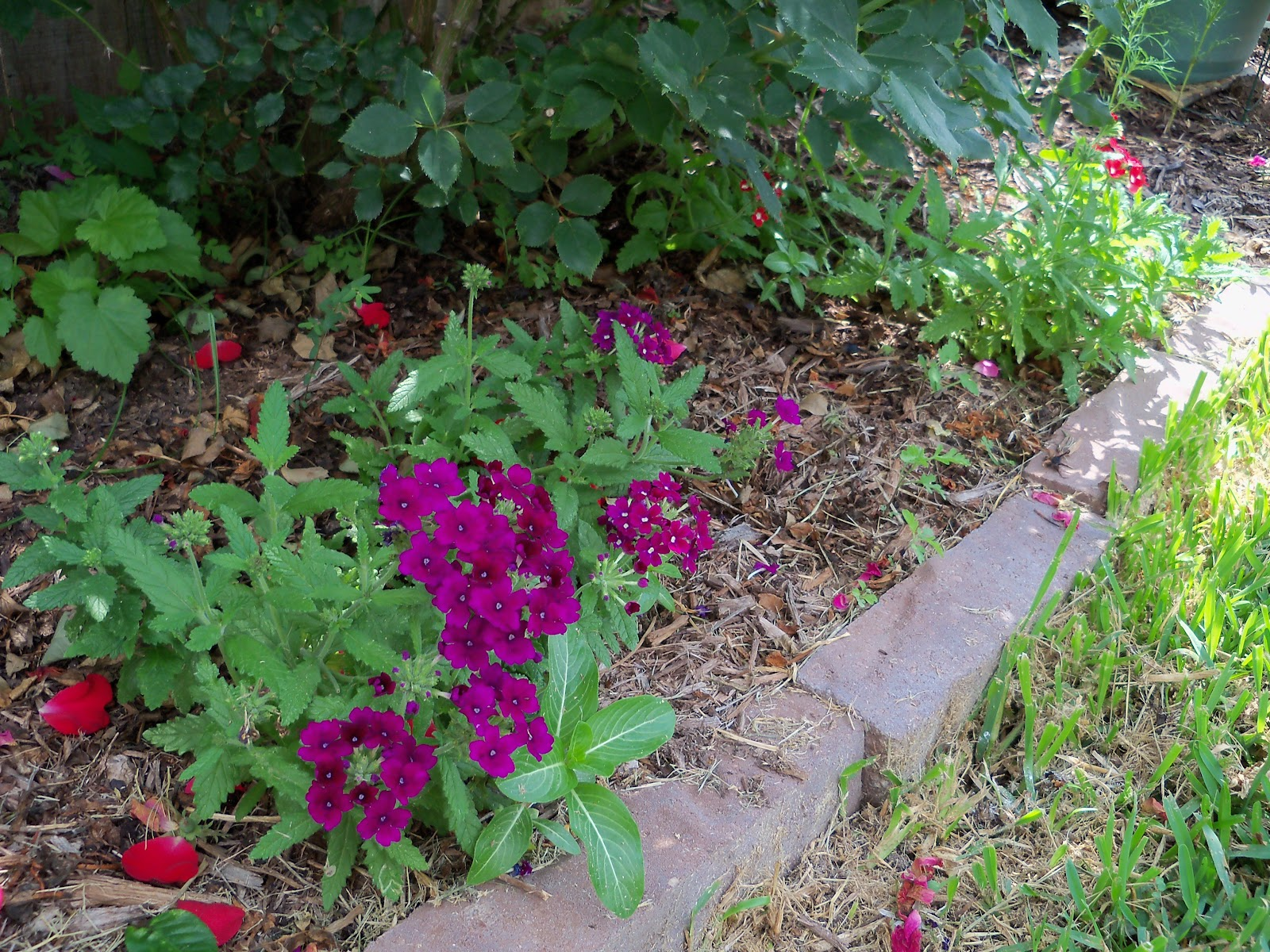 Gardening 2010, Part Two - 101_2740.JPG