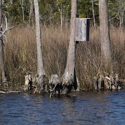 Fowl Marsh from Boat Feb3 2013 184
