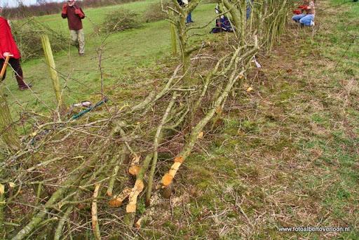 nk Maasheggenvlechten Oeffelt 11-03-2012 (6).JPG