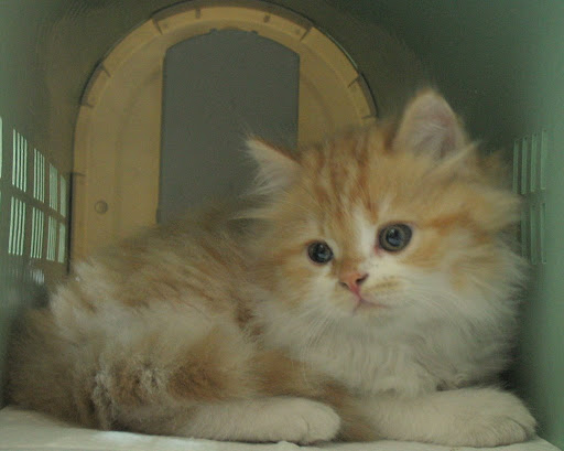 圖、20071216 橘子登場。從寵物店帶回牠,在家中打開籠子的那一瞬間。