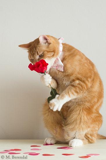 [Teddy_Valentine_2_01%5B4%5D]
