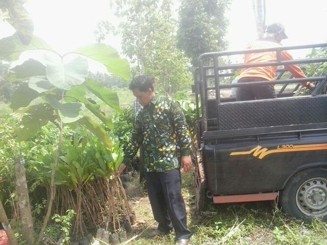 Kabag Pembangunan Desa Caturharjo memeriksa bibit tanamam buah buahan yang akan ditanam di Wanadesa Slayur Caturharjo