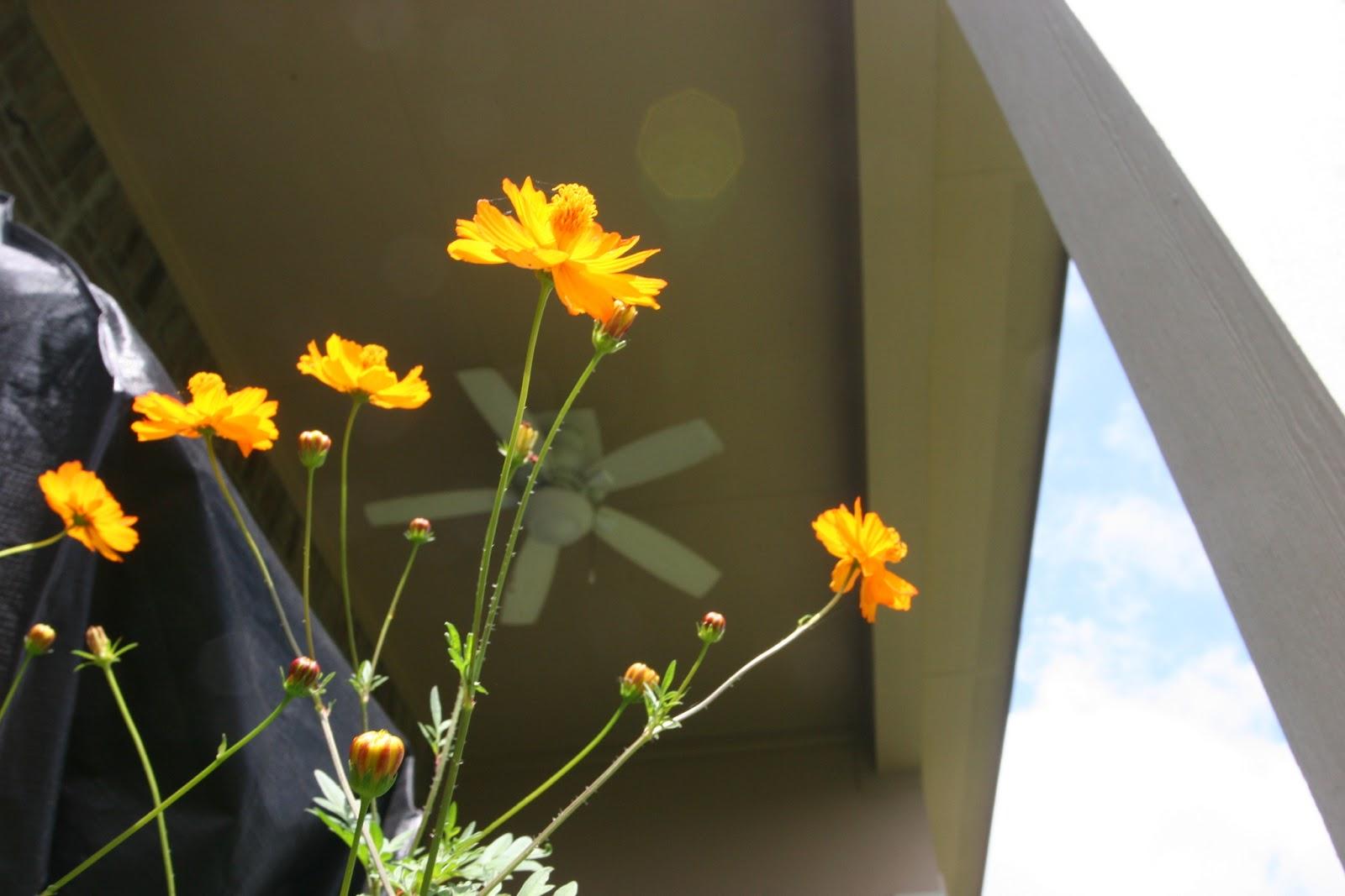 Gardening 2012 - IMG_3792.JPG