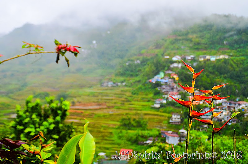 The bird of paradise flower taken from the upper ground near Banaue Museum