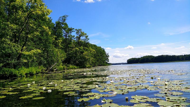 Seerosen auf dem Vilzsee
