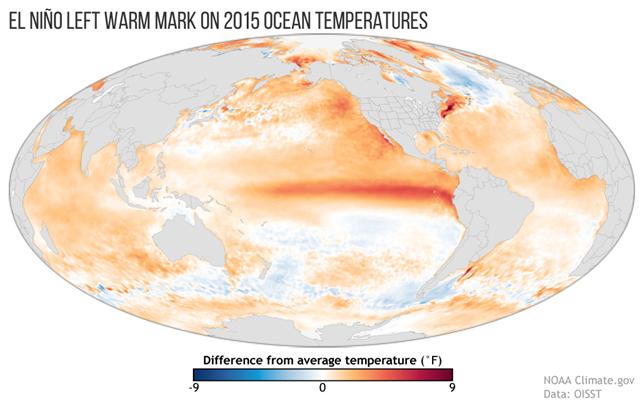Worldwide sea surface temperatures in 2015 compared to the 1981-2010 average. A dark orange swath through the tropical Pacific Ocean in image center shows the year-long influence of El Niño. Graphic: NOAA Climate.gov