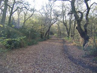 DSCF1522 Wimbledon Common path in Autumn