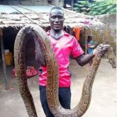 We went hunting and came back with giant python , come over to my place let's do justice to it , python pepper soup is ready