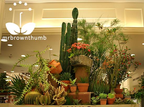 Cactus Garden, Macy's Chicago Flower Show
