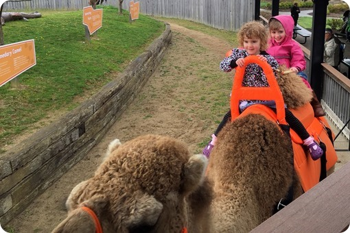Camel Ride at the Creation Museum