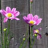 Gardening 2010, Part Two - 101_2495.JPG