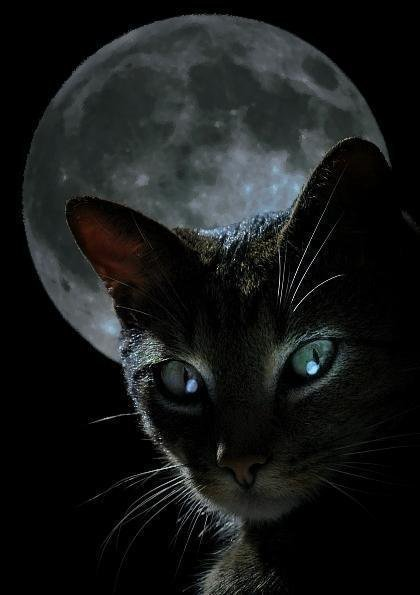 Moon And Wicked Cat, Moon Magic