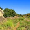 laguna_coast_wilderness_IMG_2232.jpg