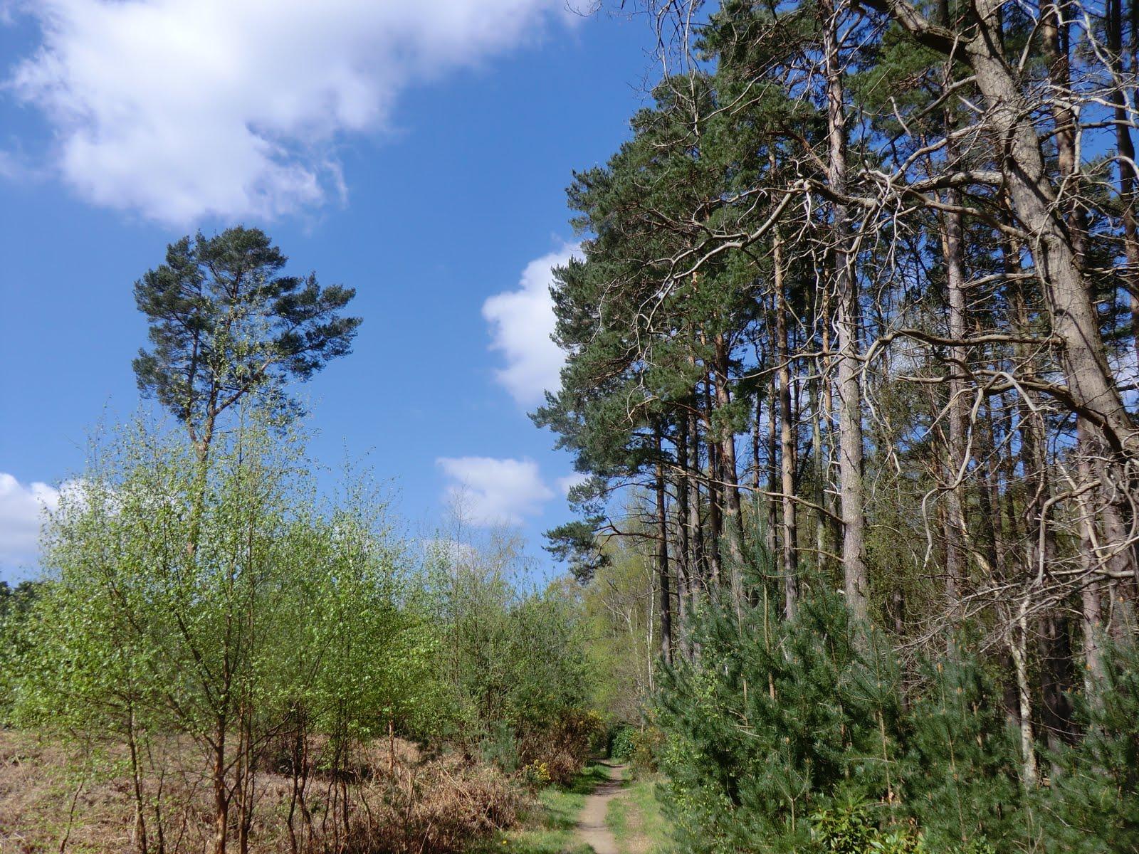 CIMG0444 Heath Ride