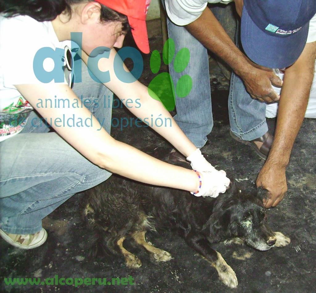 Campaña de asistencia en Mangomarca SJL (1)