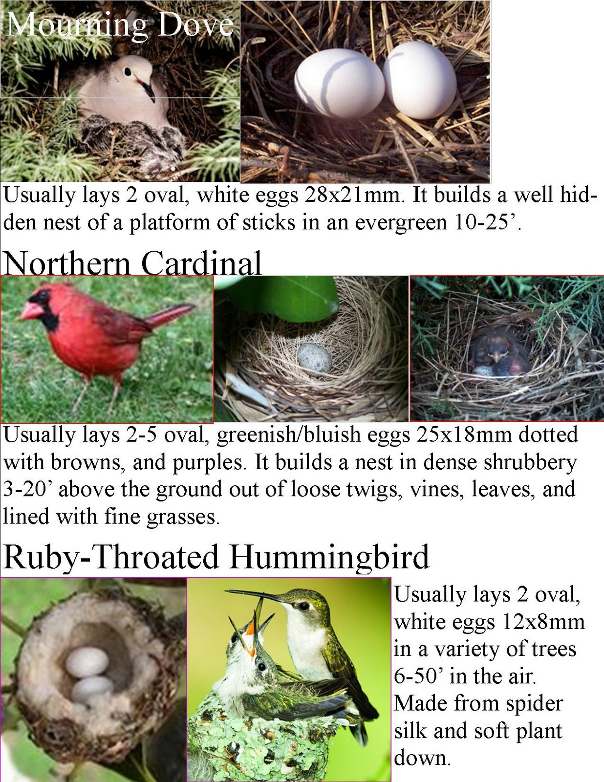wild birds unlimited common backyard bird nest identification