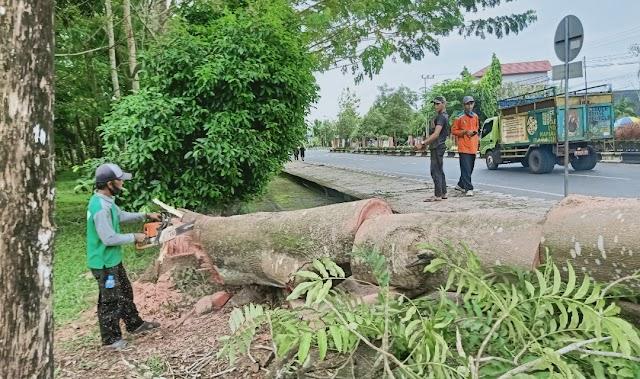 Bakal Diremajakan, DLH Tebang 22 Batang Pohon Hutan Kota
