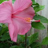 Gardening 2011 - 100_7610.JPG