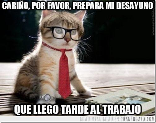 humor gatos (7)