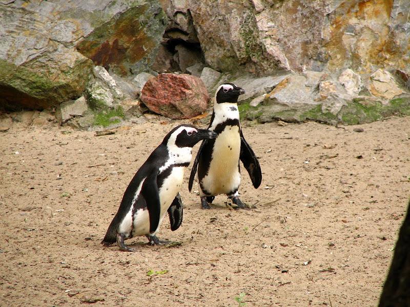 Warszawskie zoo - img_6412.jpg