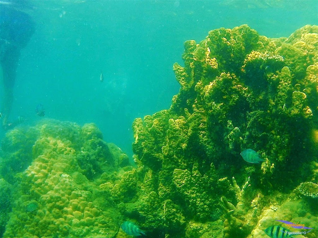 Pulau Harapan, 23-24 Mei 2015 GoPro 06