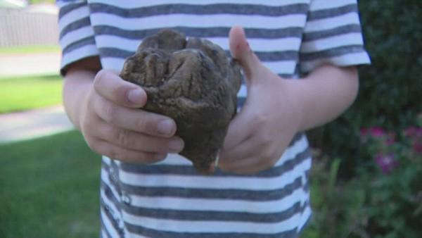 Criança de 6 anos descobre dente de mastodonte em parque dos EUA