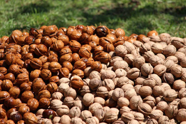 An appeal from walnut cultivators for administration