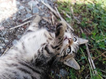 Kedi ismi