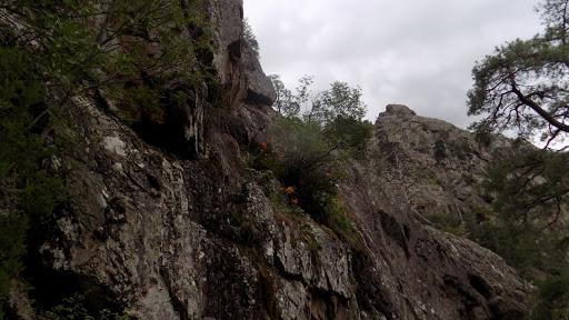 La falaise aux lys orangés