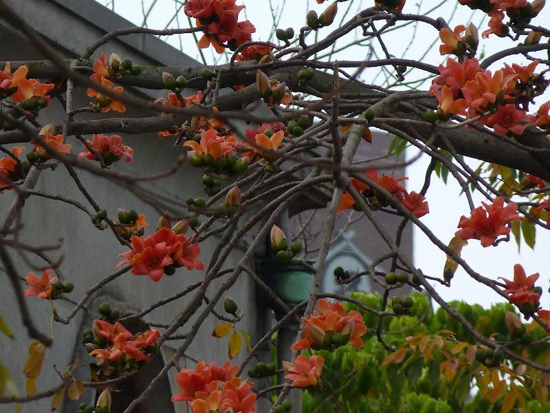 TAIWAN  Taipei - P1260173.JPG