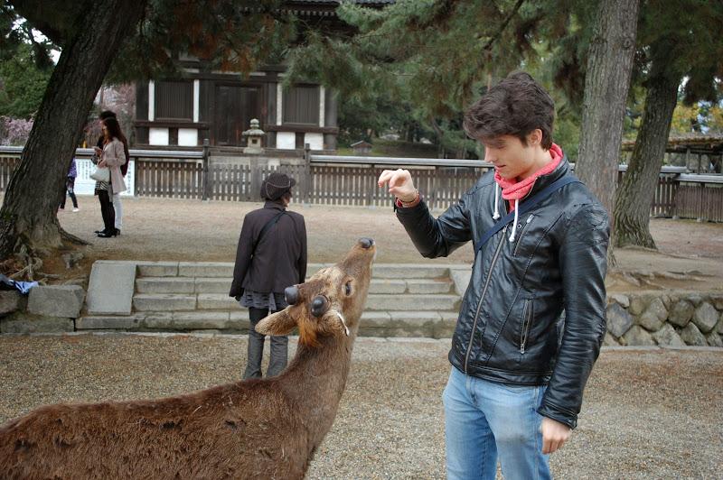 2014 Japan - Dag 8 - jordi-DSC_0417.JPG