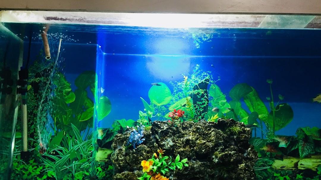 Imran Fish Aquarium Shop Fishing Store In New Delhi