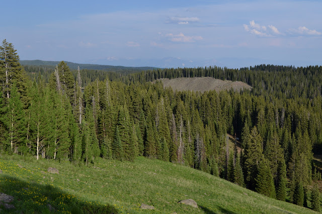 grassy hills with trees surrounding