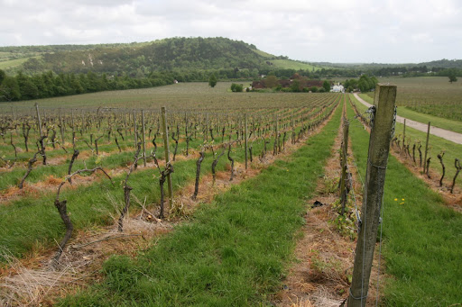 0905 061 Denbies Wine Estate, Surrey, England