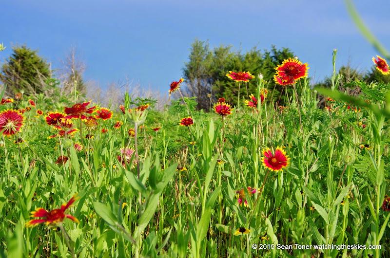 05-26-14 Texas Wildflowers - IMGP1395.JPG