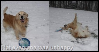 untitled.png Happy retreiver in snow