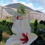 Gardening 2010 - 101_0971.JPG