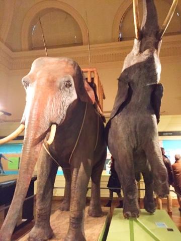 Musée d'histoire naturelle de Tournai