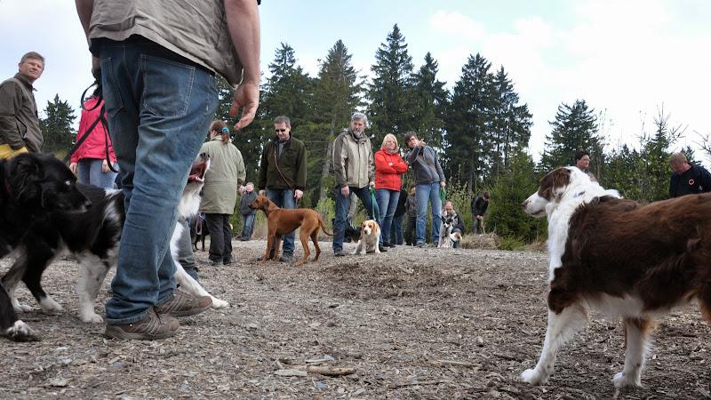 2014-04-13 - Waldführung am kleinen Waldstein (von Uwe Look) - DSC_0396.JPG