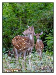 _MG_4038_www.keralapix.com_Mudumalai Bandipur Forest Road